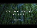 Calmbience Birds. Эмбиент 2017. Музыка для медитации, йоги, релаксации, дыхания, духовных практик