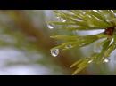 Наша Сибирь HD Весна