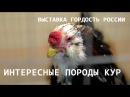 ИНТЕРЕСНЫЕ ПОРОДЫ КУР на выставке Гордость России 2017 обзор породистых и декоративных кур