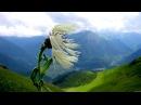Ангельская мелодия Тень ветра Music to relieve stress Meditation