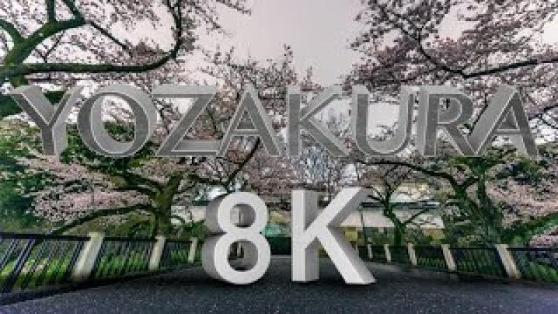 [8K 4320P HDR] YOZAKURA TIME LAPSE in 8K ハイダイナミックレンジ夜桜 8K映像