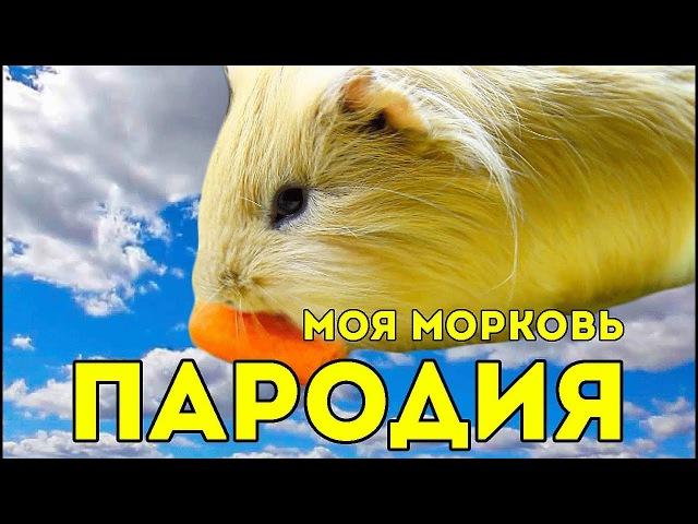 ПАРОДИЯ Макс Барских Моя любовь Моя морковь SvinkiShow