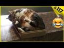 Смешные кошки приколы про кошек с котами 2018 117 Топовая подборка с котами