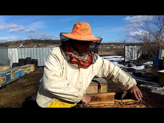 ВЕСЕННЯЯ РЕВИЗИЯ СЕМЬЯ И МЫШИ (2)Секреты начинающим пчеловодам от А до Я
