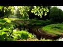 Ручей в лесу. Звуки природы. Пение птиц солнечным днем Sounds of nature. Singing birds