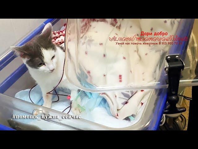 Реанимация котёнка с гипотермией и пневмотораксом Волонтёры Спасают пять бездо...