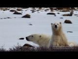 Behind The Scenes - BJ Kirschhoffer, Polar Bears International