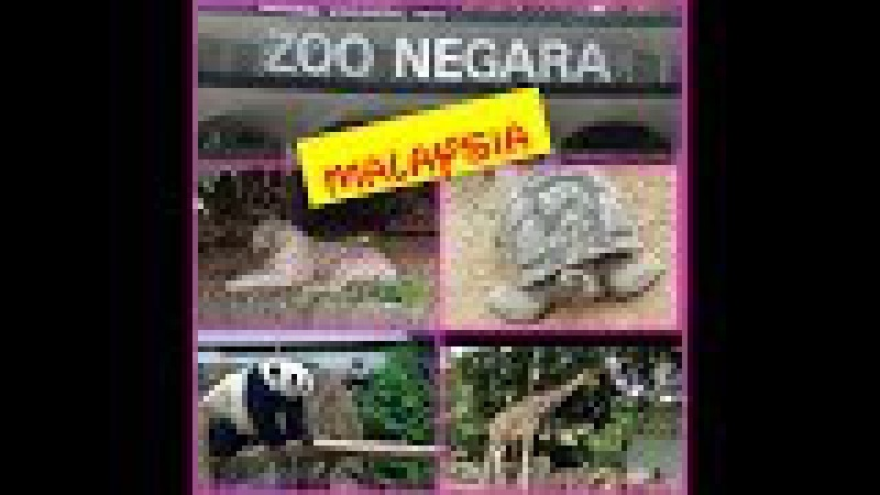 ZOO NEGARA - MALAYSIA