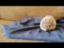 Кот и ёжик (VIDEO ВАРЕНЬЕ)