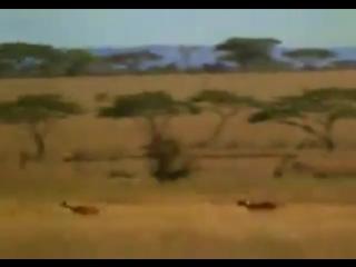 Video-cea4b1ca04fcb35773fcf4e0daa4f4e4-V.mp4