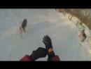 Катание с горки прогулка собак Часть11