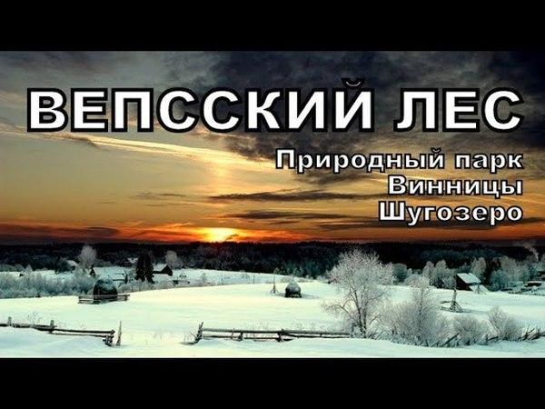 Вепсский лес Заповедник Винницы Шугозеро