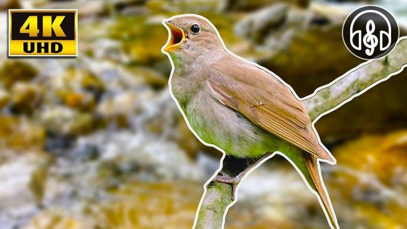 Звуки природы: шум горной реки и пение лесных птиц для сна