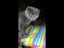 Моя кошка Нюша тащится от рэпа!