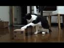 Кошка играет с копилкой Кот воришка