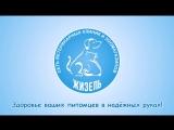 Сеть ветеринарных клиник и зоомагазинов Жизель, г. Кириши