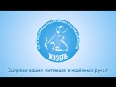 Сеть ветеринарных клиник и зоомагазинов Жизель г Кириши