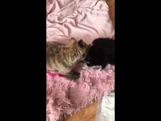 Биби и Тигруля