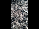 спаривание матки пчел листорезов