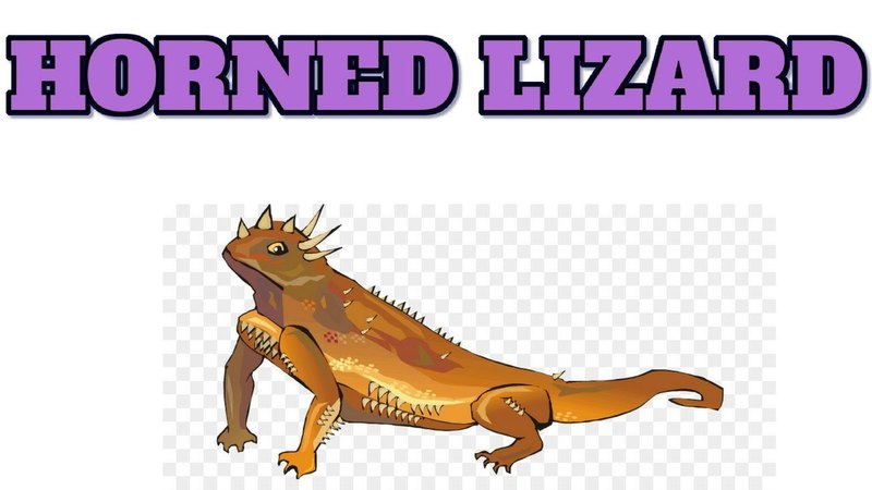 [Animal 12] Watch about HORNED LIZARD fact, you will be suprised