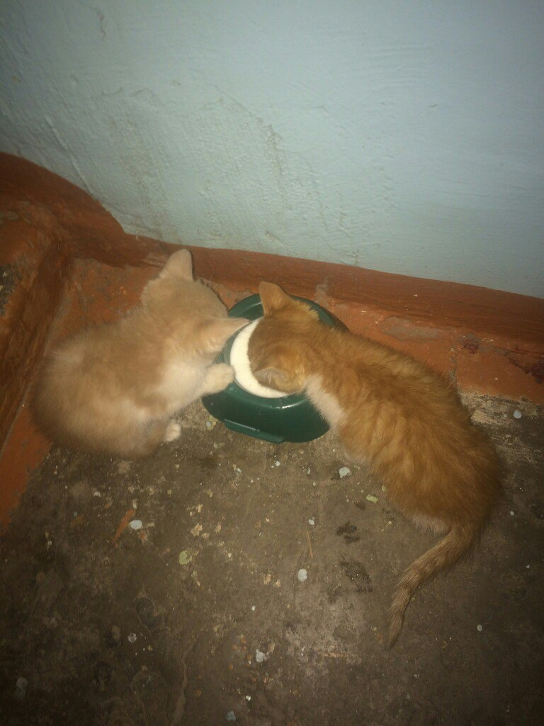 В подъезд подкинули,двух рыженьких   котят!