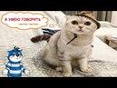 Смешные кошки Приколы про кошек и котов 2018 #10 ГОВОРЯЩИЕ КОТЫ И КОШКИ – очень смешное видео