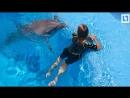 Плаваем с дельфинами