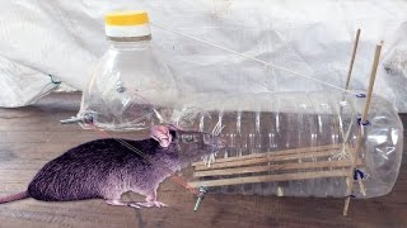 Wow! Simple Mouse Trap - How To Make a Easy Simple Mouse Trap Using Plastic Bottle In Cambodia