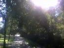 Обычная Прогулка По Парку На Природе В Выходной День Город Тюмень 13 08 2016