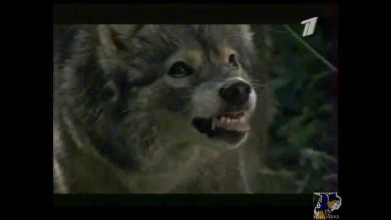 Реклама фильмов на ТВ. ОРТ. Граница. Таежный роман (ноябрь, 2000)