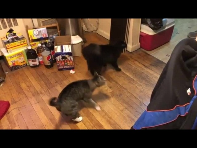 Cats do a synchronized dance