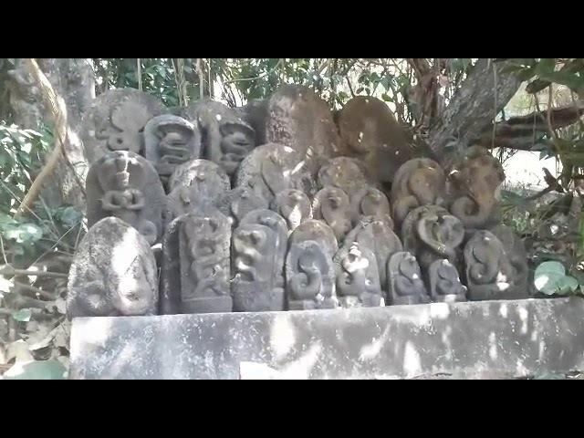 О почитании змей в Удупи, южная Индия (Ведалайф тур в Индии)