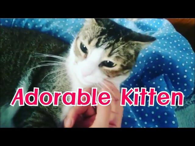 Cat Cafe I Adorable Kitten I Kitten I 고양이 I Pet I Healing I Animal Therapy