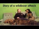 Wildboar-wounded dog's treatment with DXN Ganoderma and Spirulina