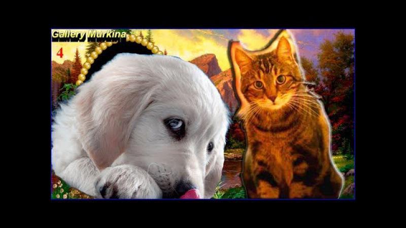 Лучшие приколы: Смешное про животных Выпуск 4