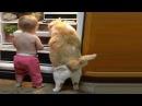 Смешные собаки Приколы про собак Funny Dogs 2017 4 смешные дети и собаки приколы с детьми