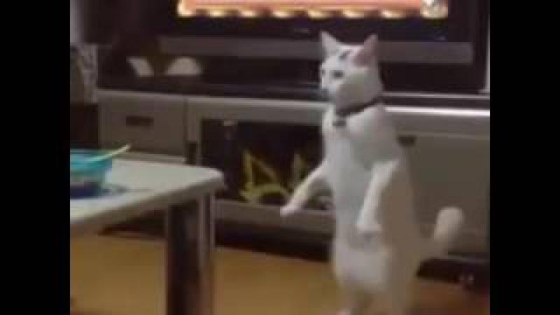 Creepy cat!