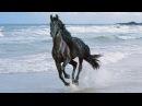Любимый мой лети как вольный ветер...