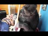 Red Hot Chili Peppers bassist Flea meets Koko the gorilla