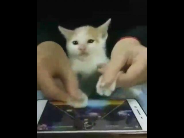 "JIKOOK SHIPPER COME HERE on Instagram: ""Si kucing ngomong"