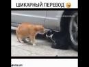 выяснение отношения кошек шикарный перевод
