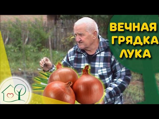 Бублик Б А Вечная грядка лука 🔃 Огород без хлопот
