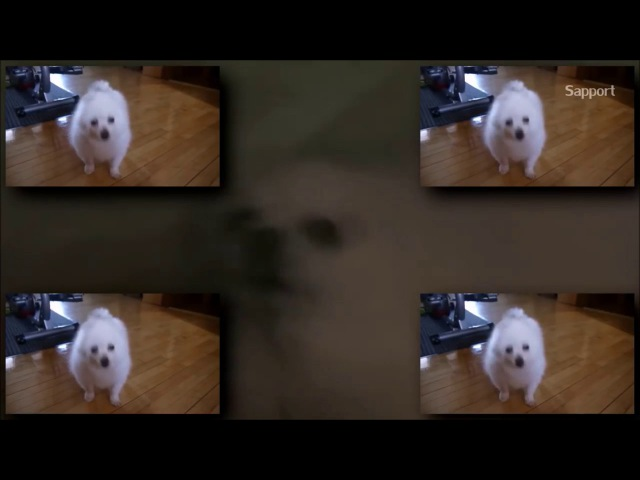 Gabe the Dog Can Can 1 hour long loop