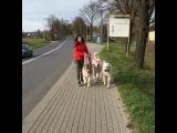 Тимерташ Львиное Сердце, Тимерташ Жасмина и Жастина (Польша)