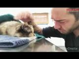 Мужчина прощается со своей умирающей кошкой, с которой прожил 13 лет
