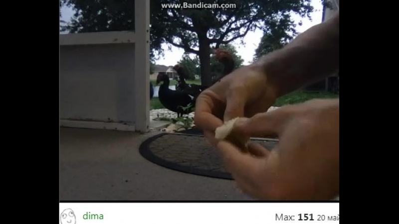 дима 001 кормит уточек перцем