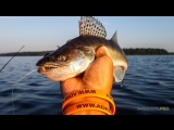 Рыбалка на реке Сал (канал на YouTube Дневник рыболова)Группа в контакте