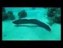 Богатый подводный мир Красного моря
