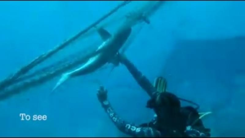 Спасение подводных обитателей из сетей