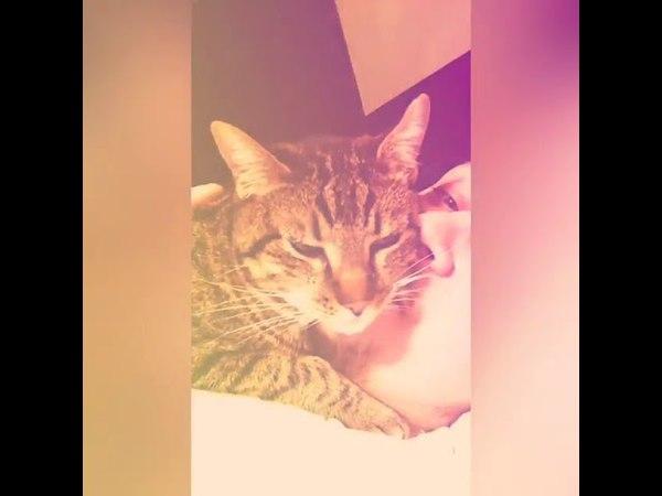 2269). 21.12.2016 - Обаятельный котик Джексон встретил свою семью! (видео из дома)